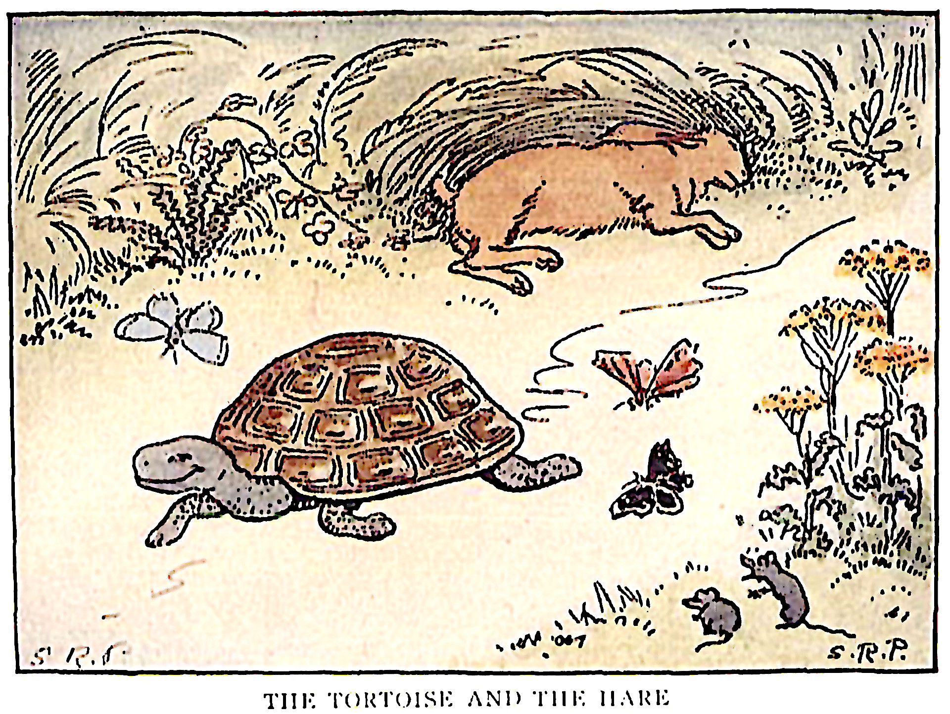 Image result for the hare and the tortoise