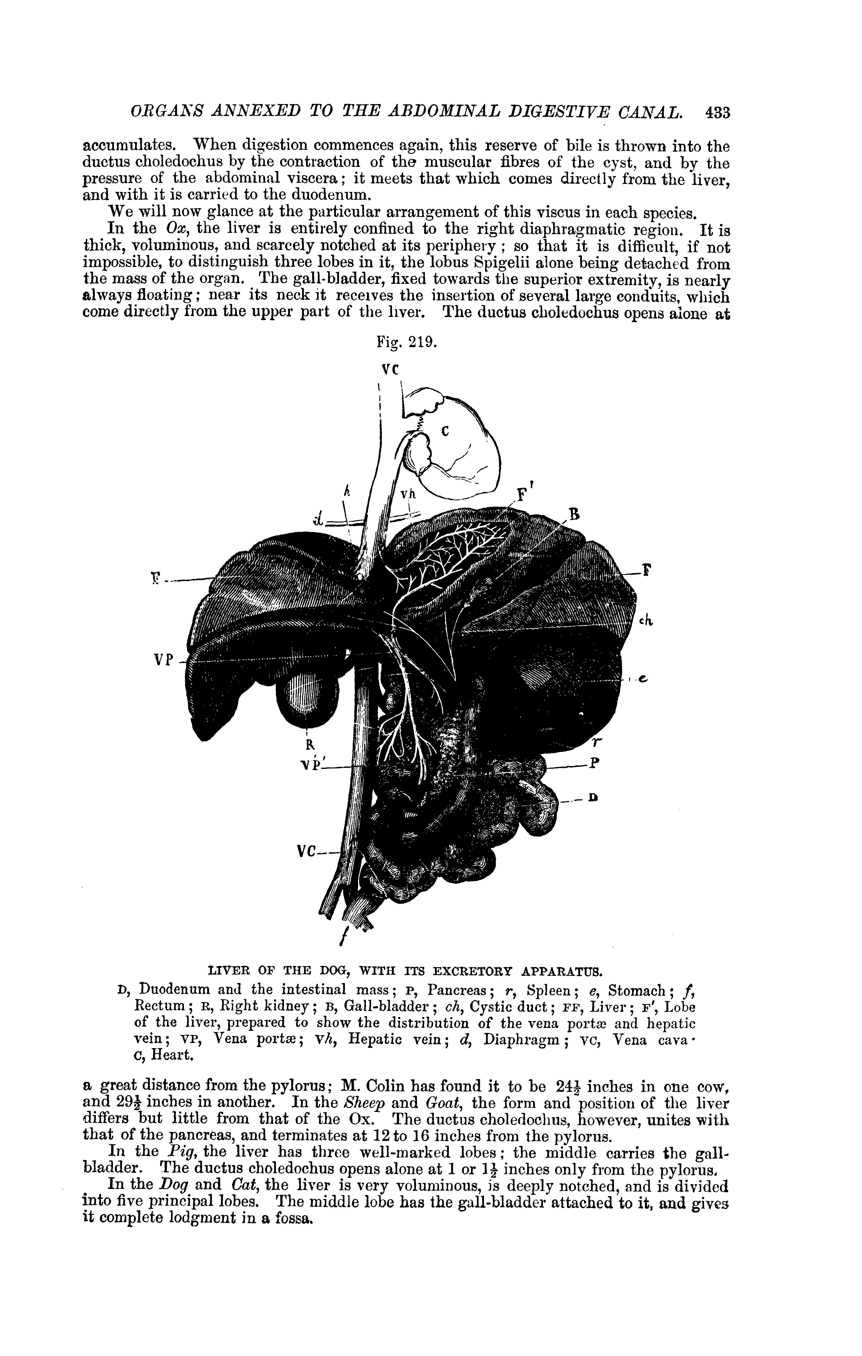 File:The comparative anatomy of the domesticated animals (1873 ...