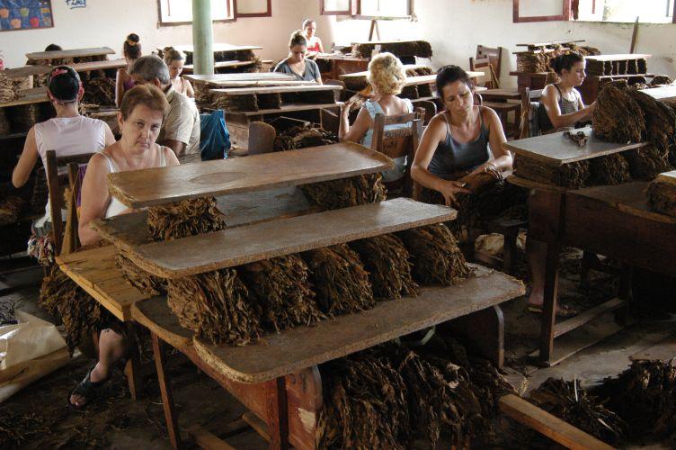 文件:Cuba.jpg在烟草加工