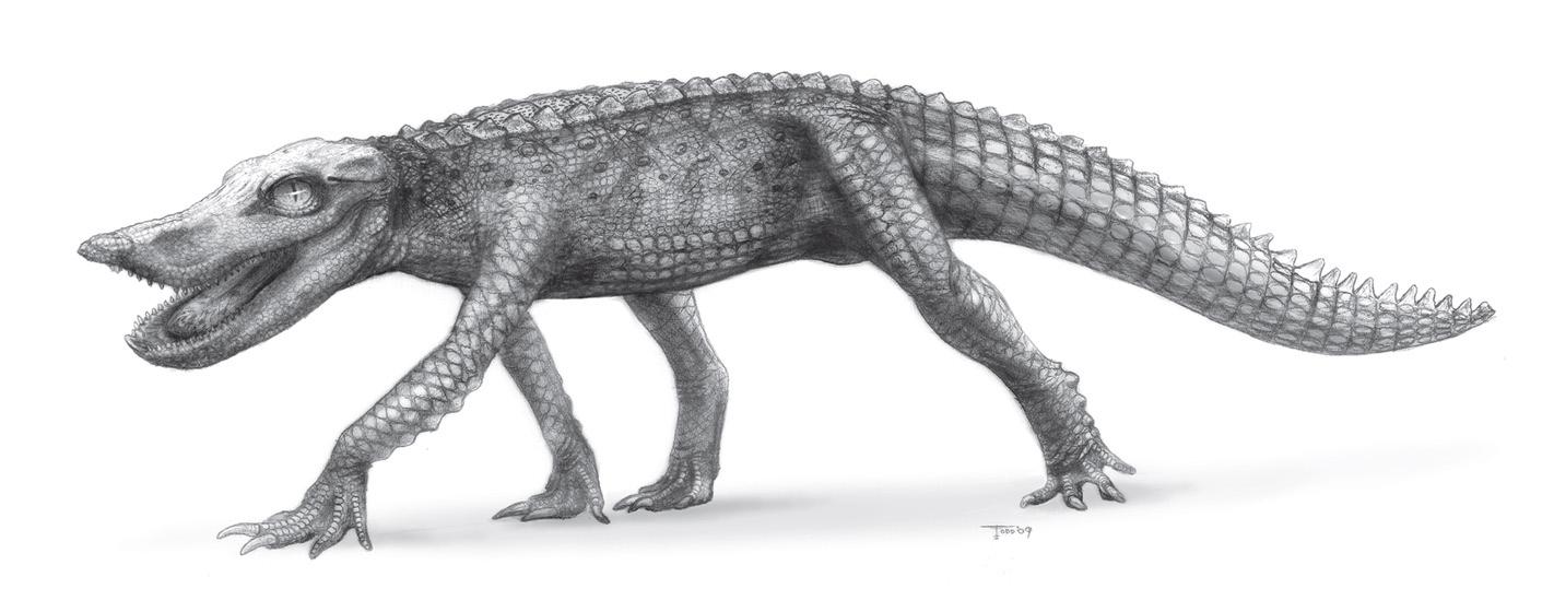 [Image: Anatosuchus.jpg]