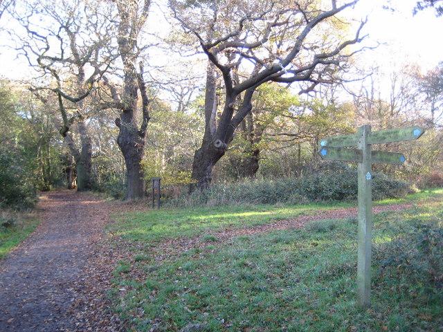 Ashtead Common, Woodcock Corner - geograph.org.uk - 1054454