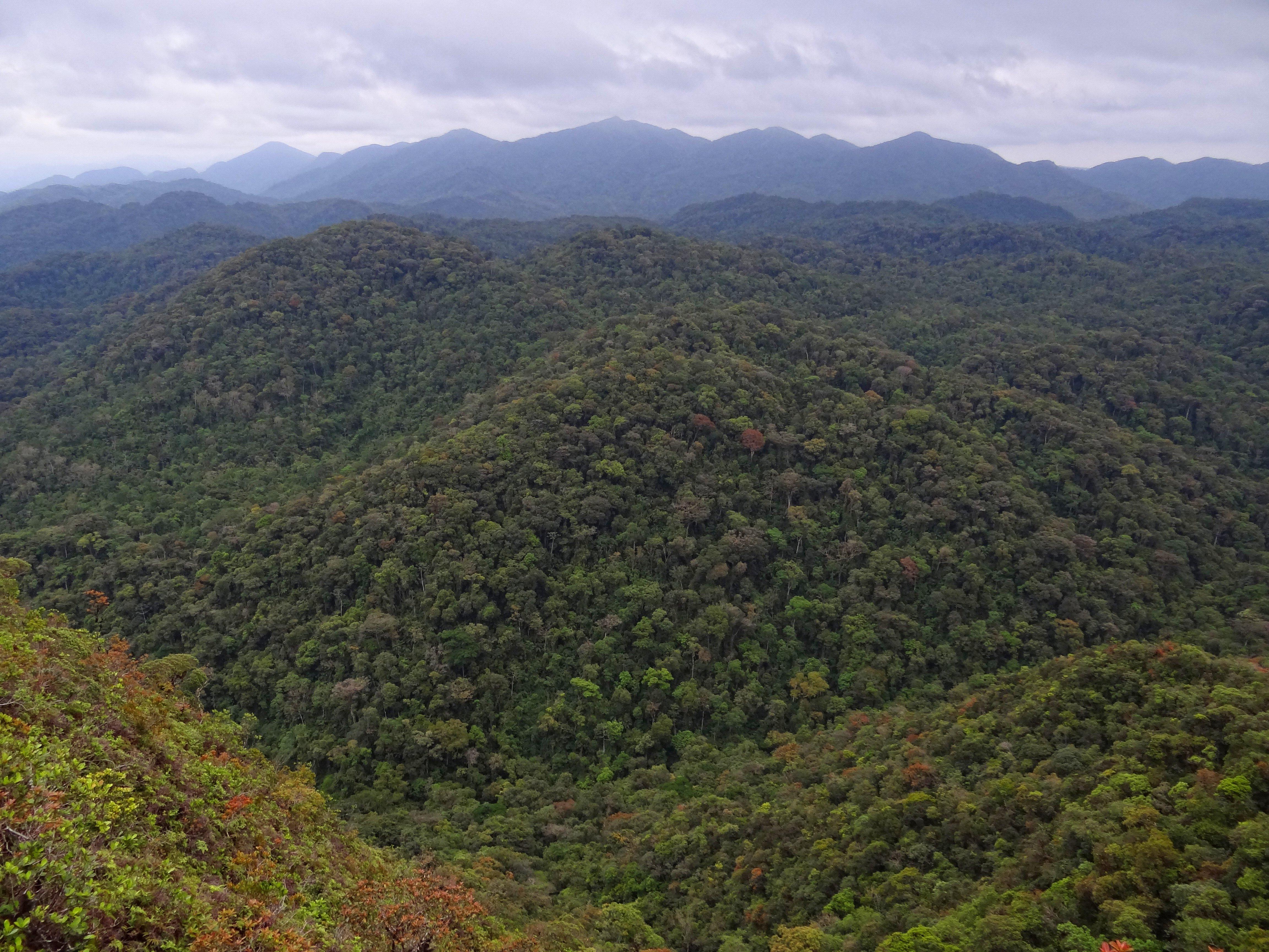 loading image for Atlantic rainforest
