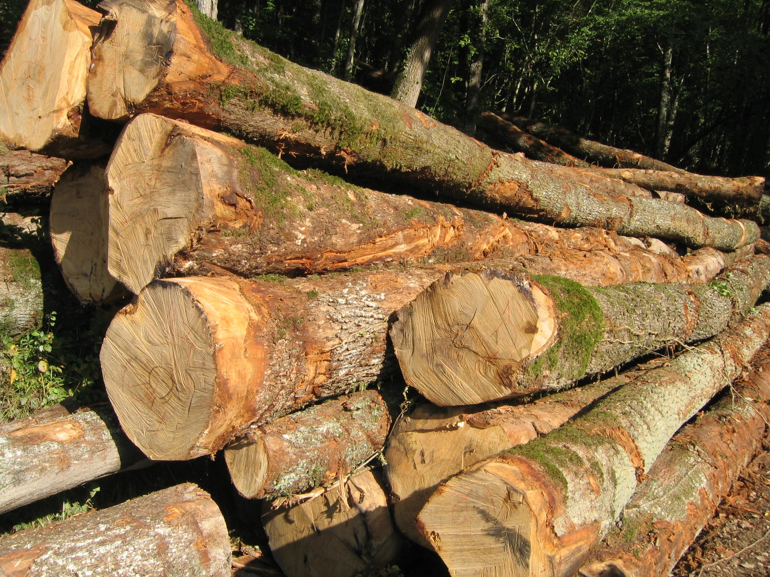 File:Billes de bois sur le bord d'une route - 003.JPG ...