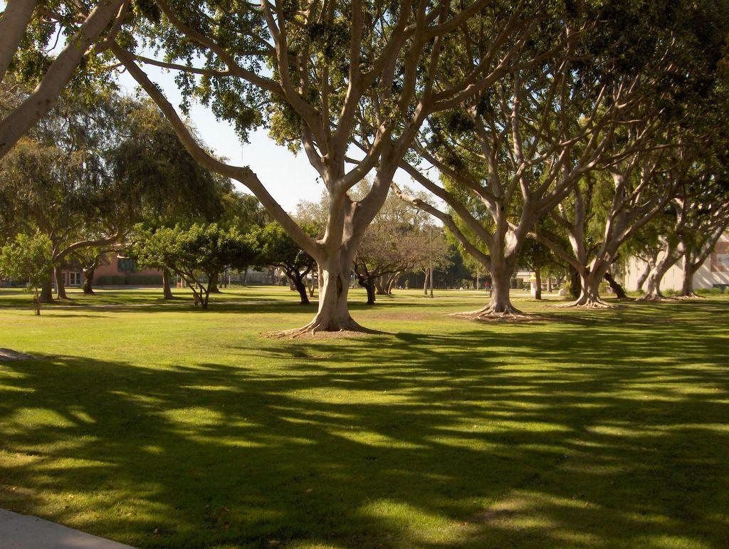 California state university for Koi fish pond csulb
