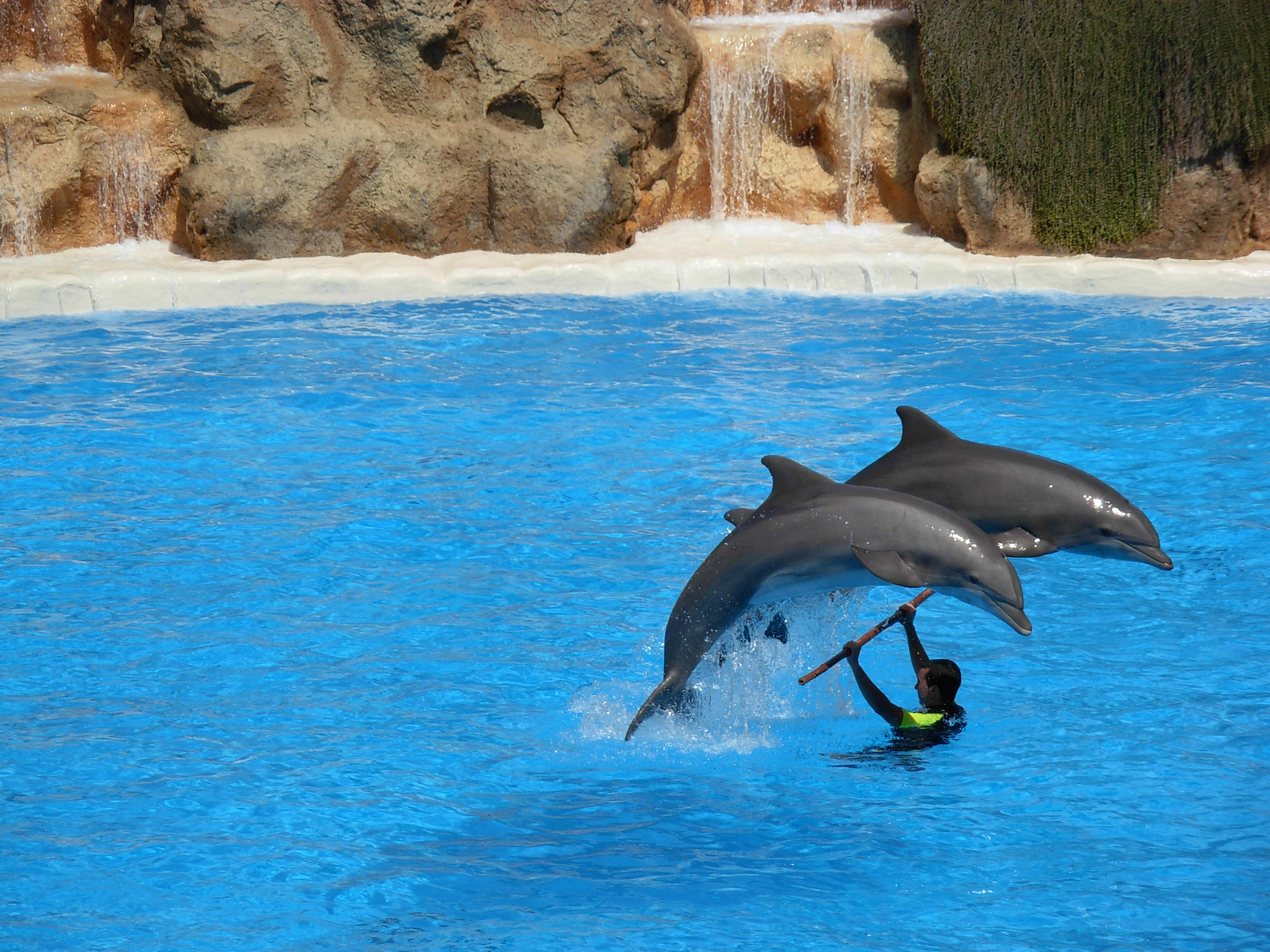 File:Dolphins at Loro ...