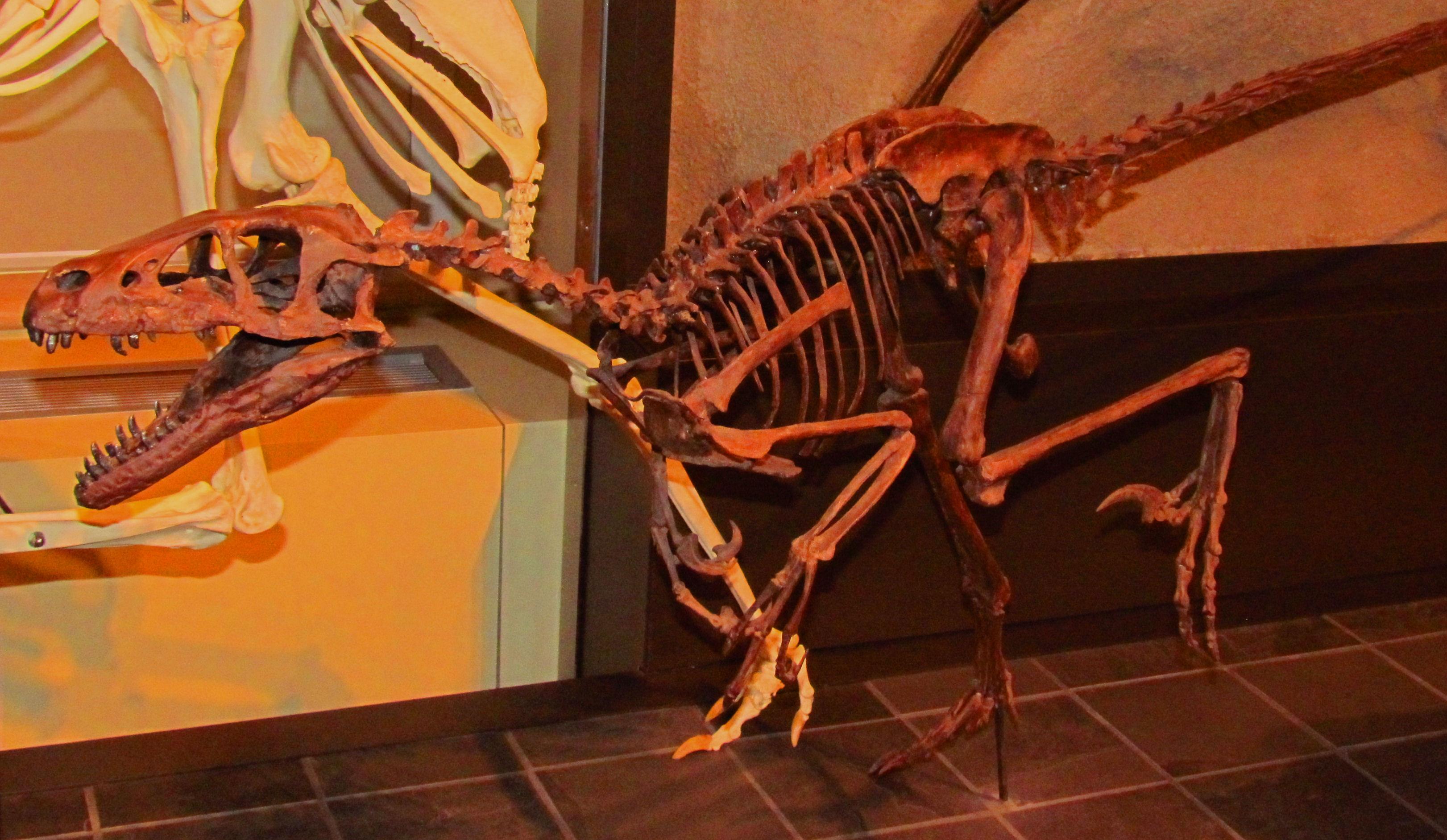 [Image: Dromaeosaurus,_Ottawa.jpg]