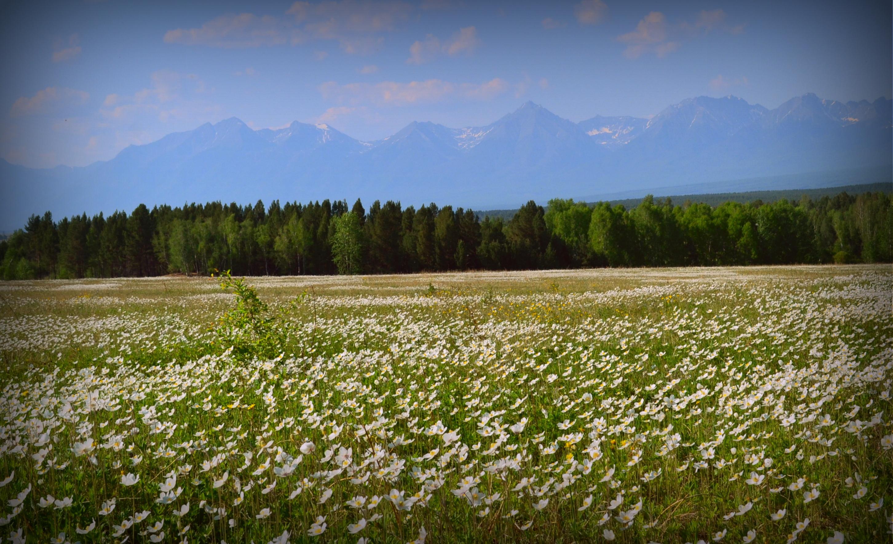 Bestandfield Of Flowers Arshan 1jpg Wikipedia