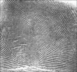 loop style fingerprint