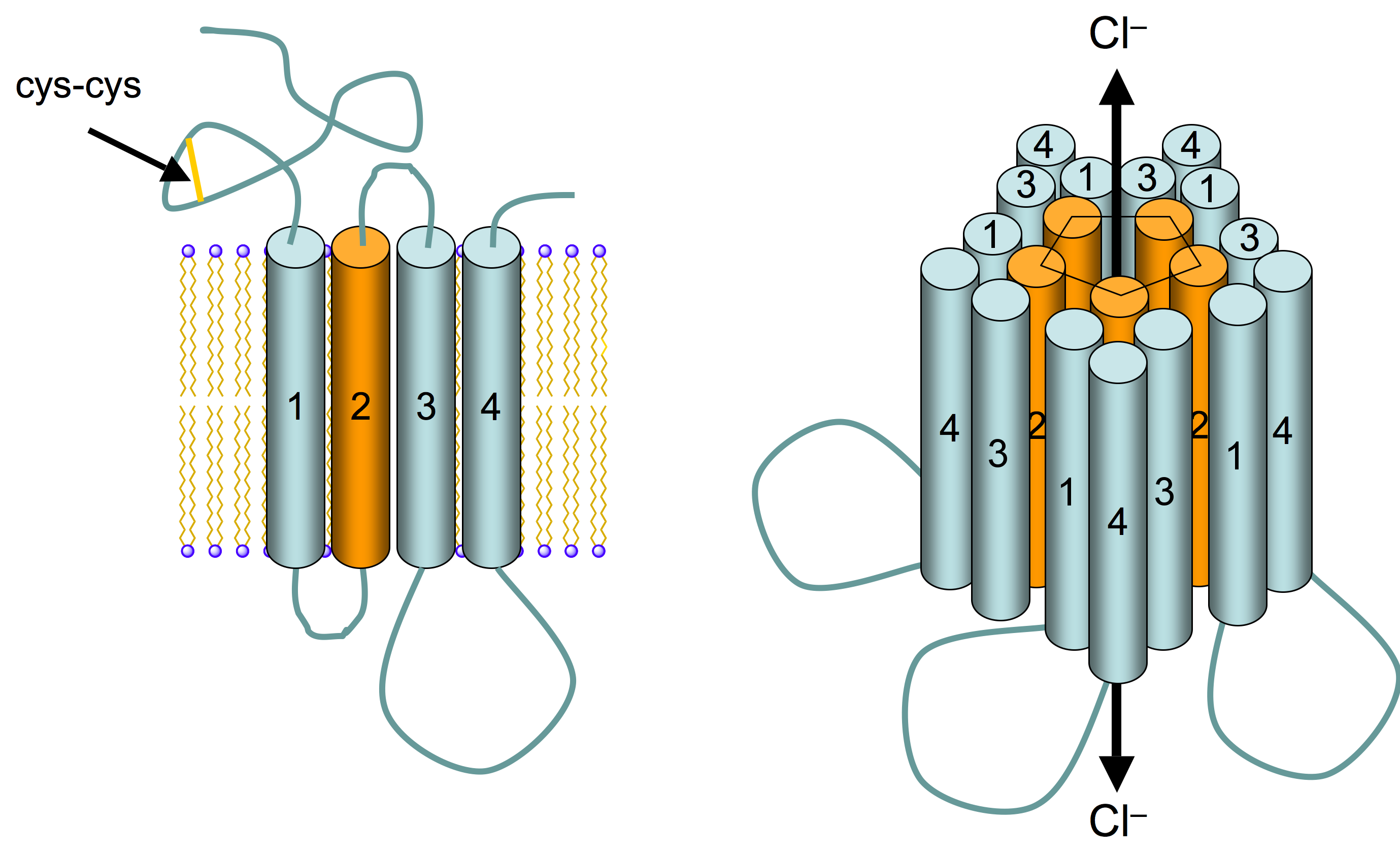 http://upload.wikimedia.org/wikipedia/commons/0/06/GABAA_receptor_schematic.png