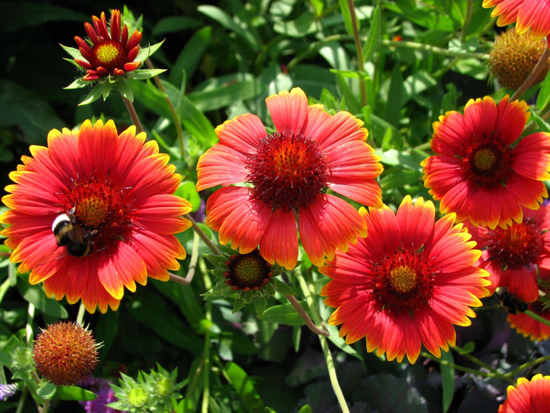 Самые красивые цветы однолетники фото и название