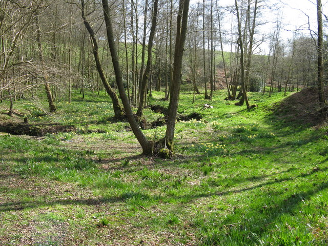 Hyde Gill flowing among wild Daffodils - geograph.org.uk - 1239104