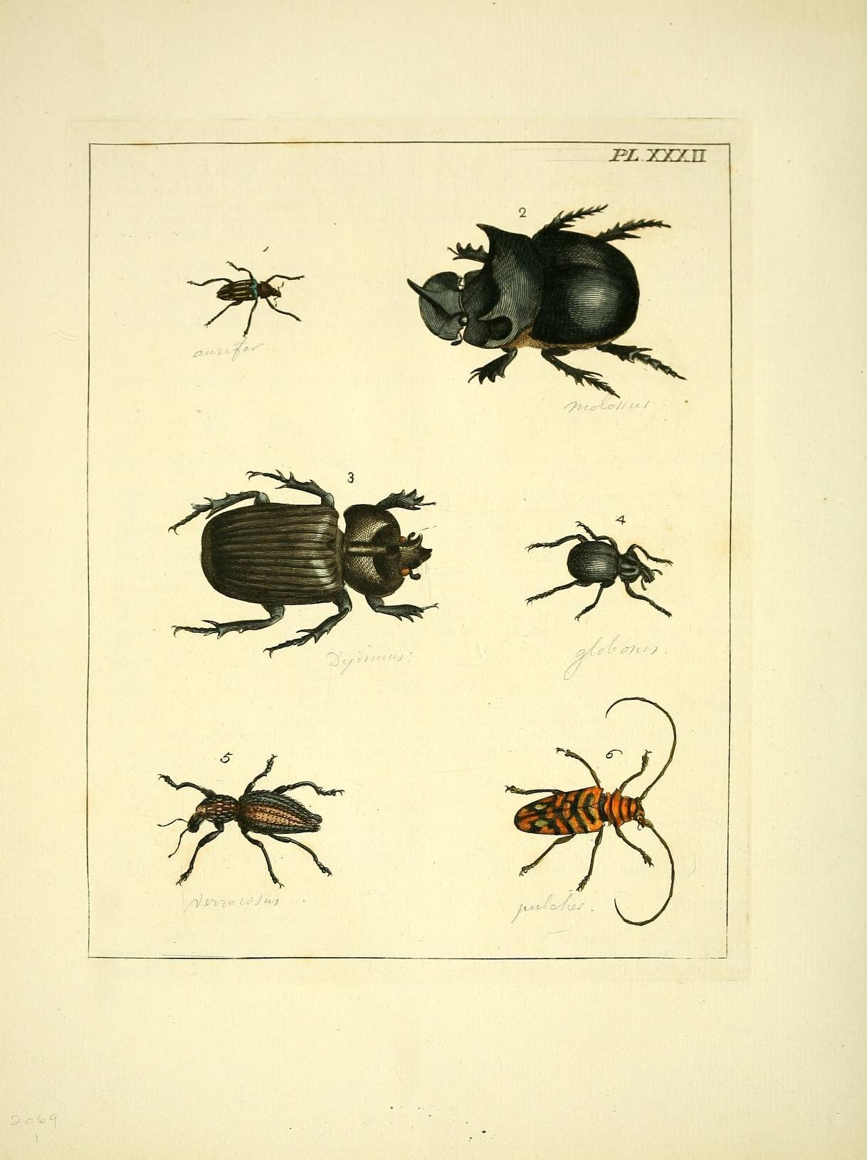 ファイル illustrations of natural history pl xxxii 8119063567