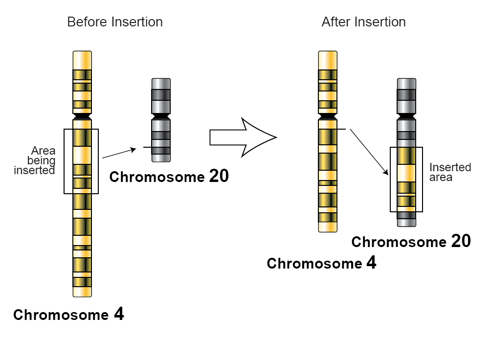 Inserting gene into genome