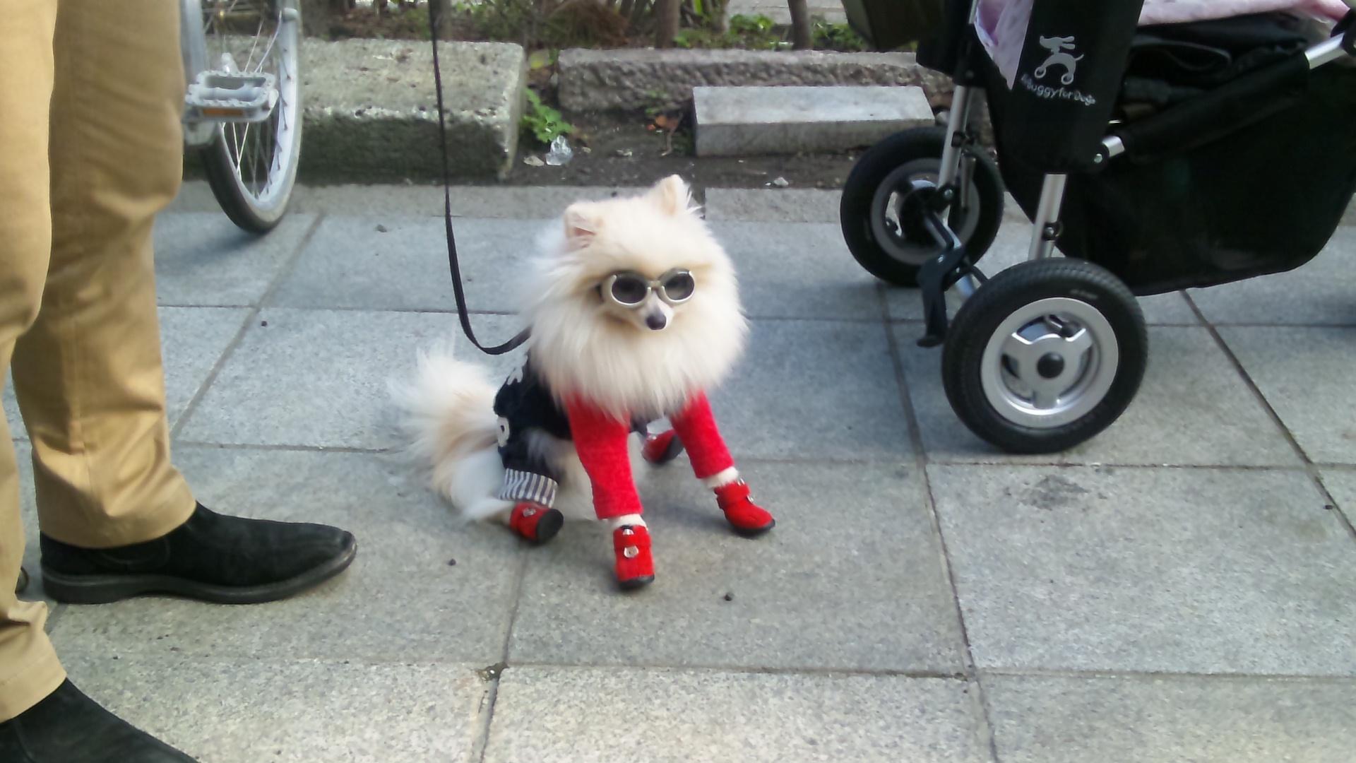 Street Dogs Free