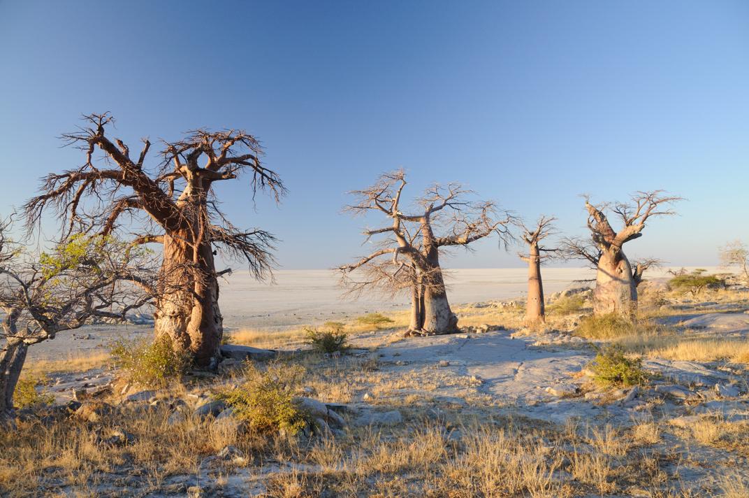 Makgadikgadi Pans, Botswana - Holidays in Africa