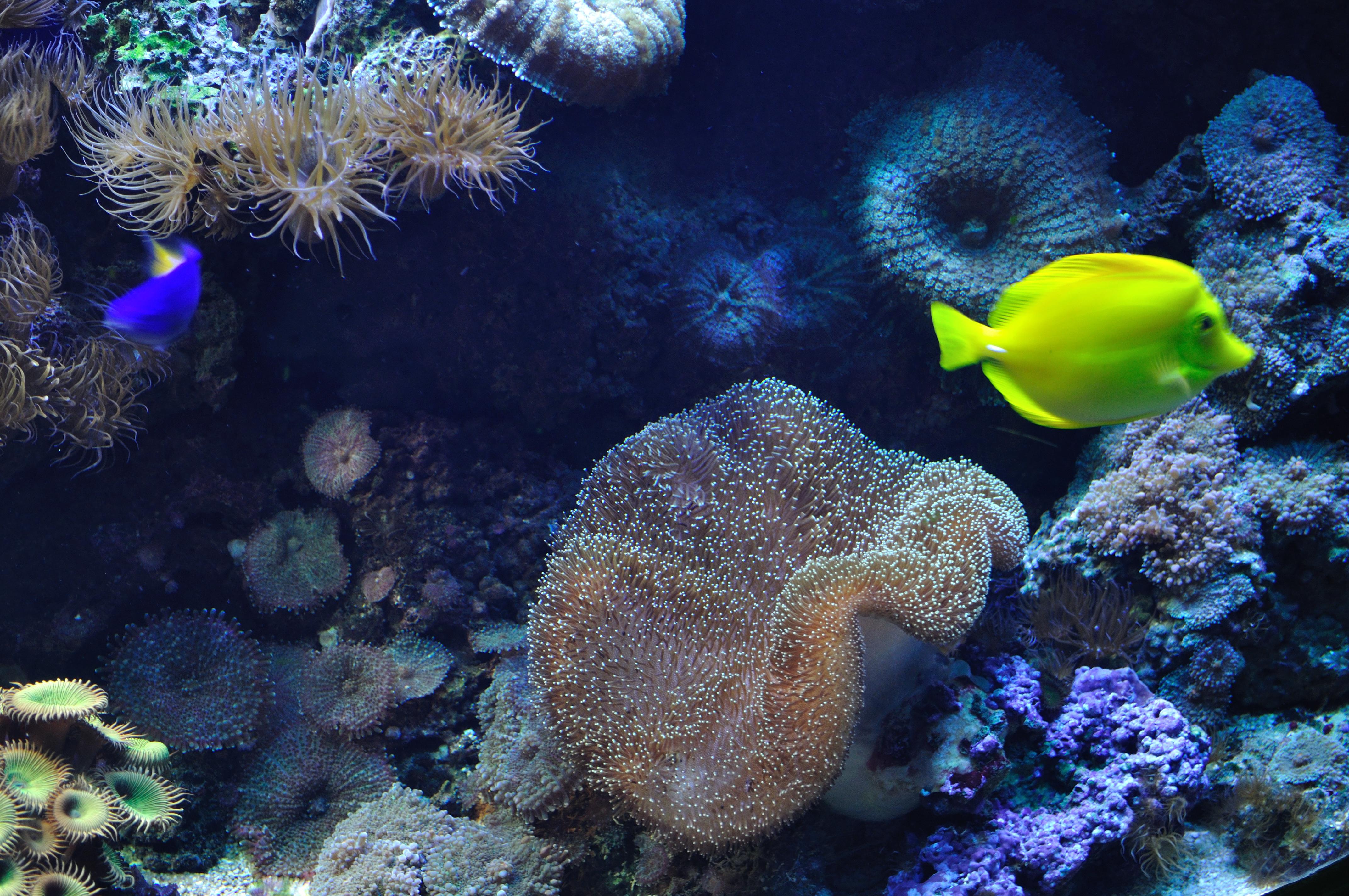 File:Marine fish & coral (5791779828).jpg - Wikimedia Commons