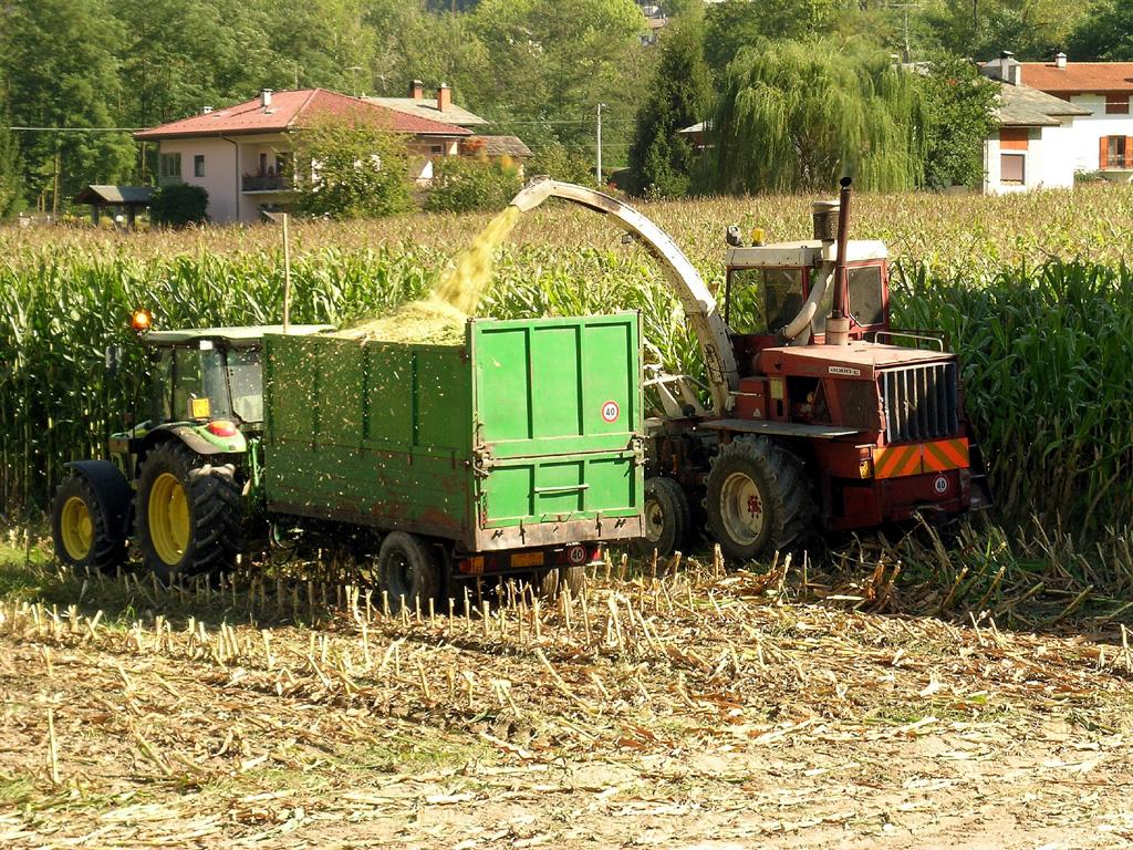 Maïs ensilage — Wikipédia ee976ea039