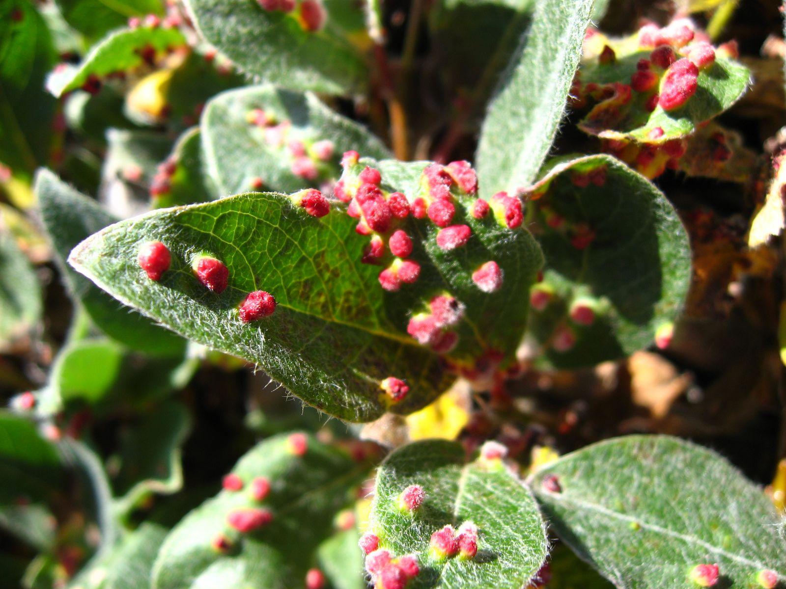 Клещи домашних цветов