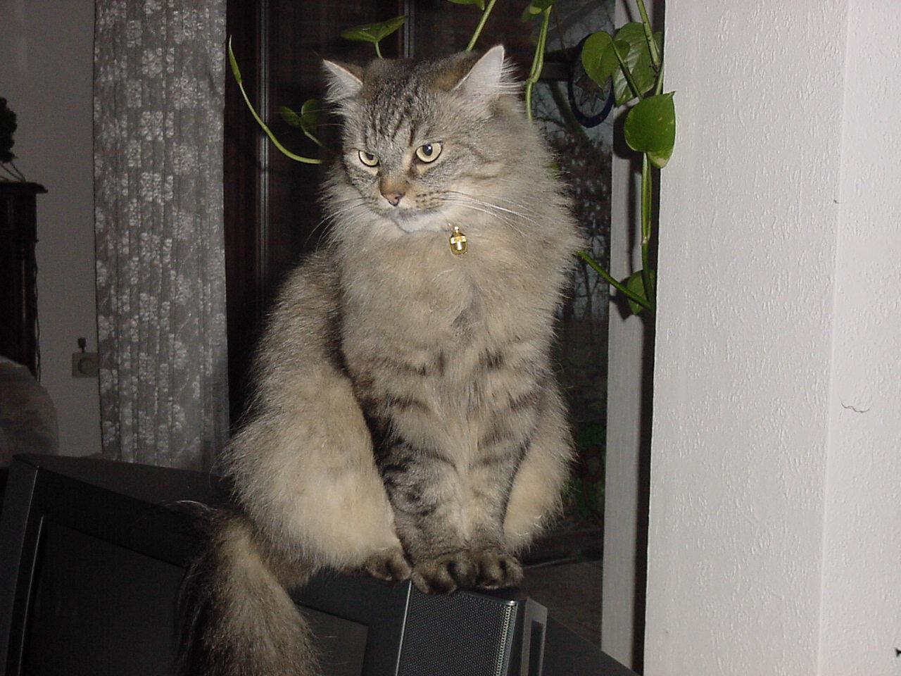 Katzen Wiki