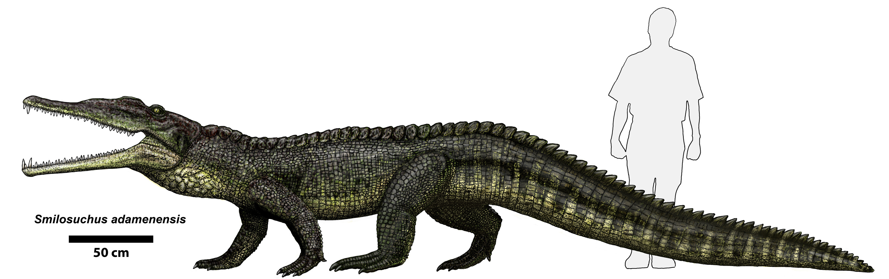 http://upload.wikimedia.org/wikipedia/commons/0/06/Smilosuchus_adamanensis.jpg