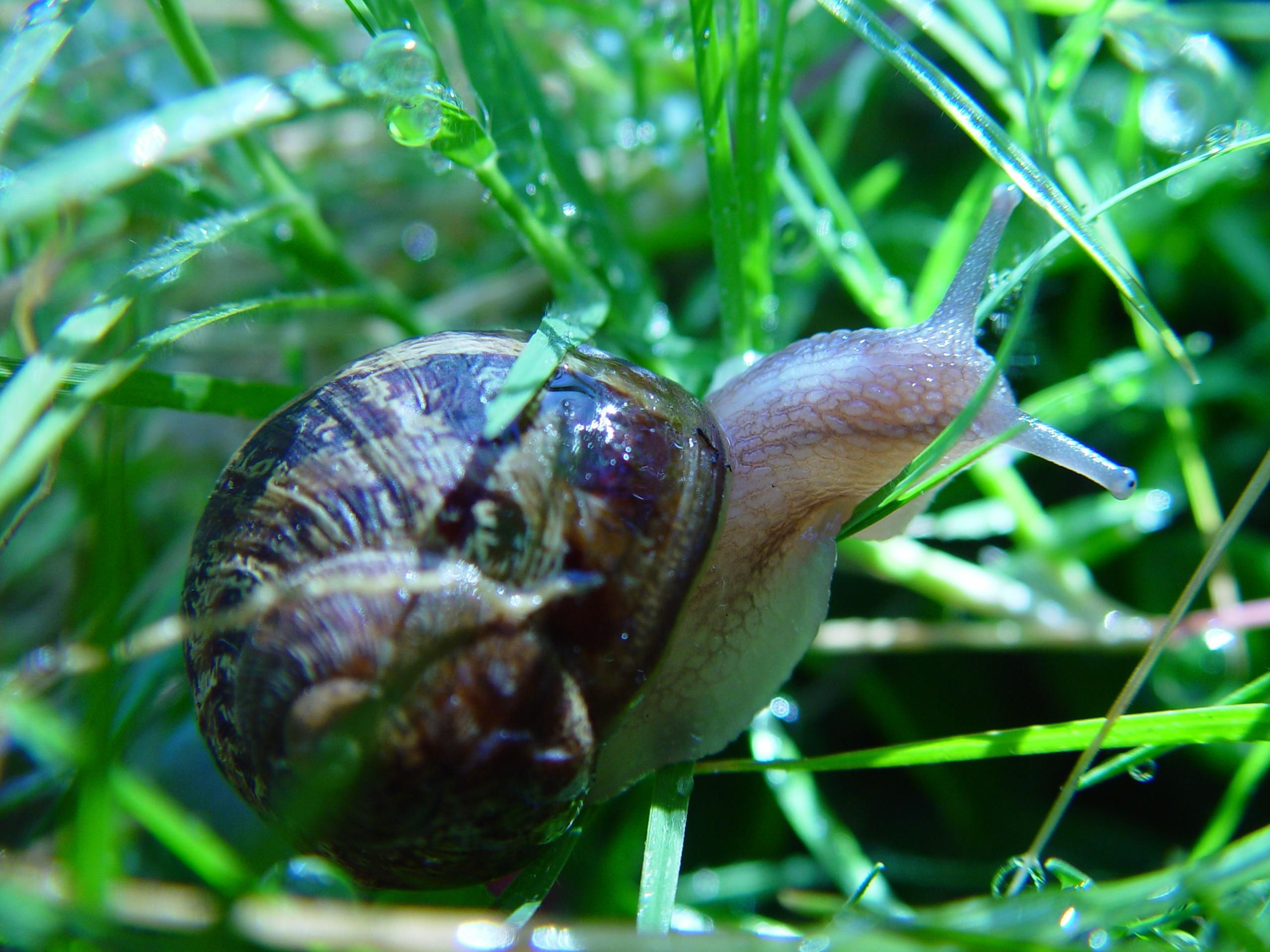 Snail Pests