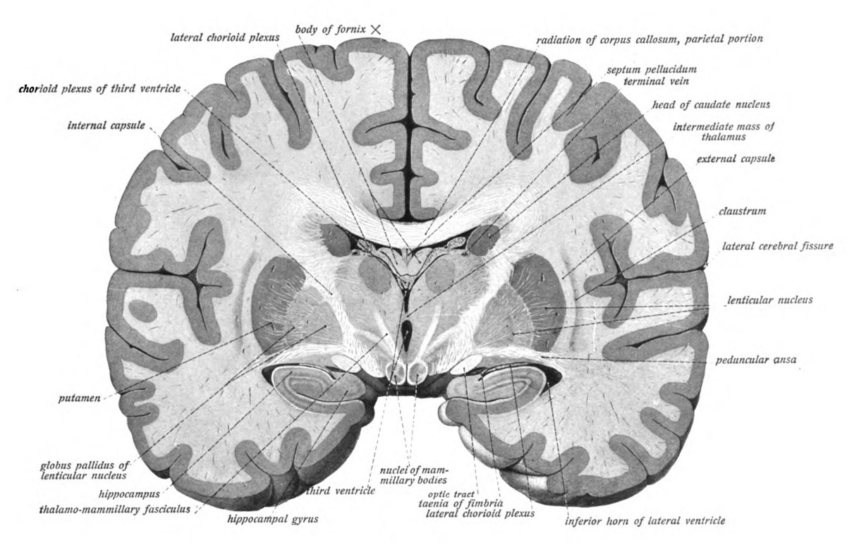 More etymological maps of the brain neuroskeptic most ccuart Images