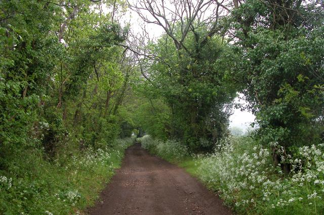 The Sussex Border Path - geograph.org.uk - 11010
