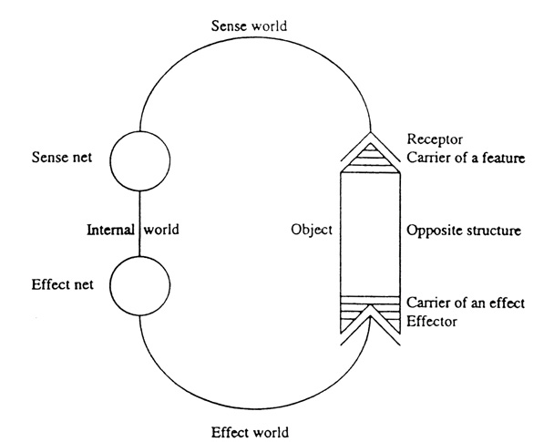 Schematic view of a cycle as an early biocyberneticist