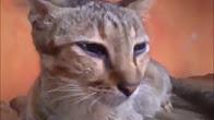 File:Uttaran Parody Kucing Imut.jpg