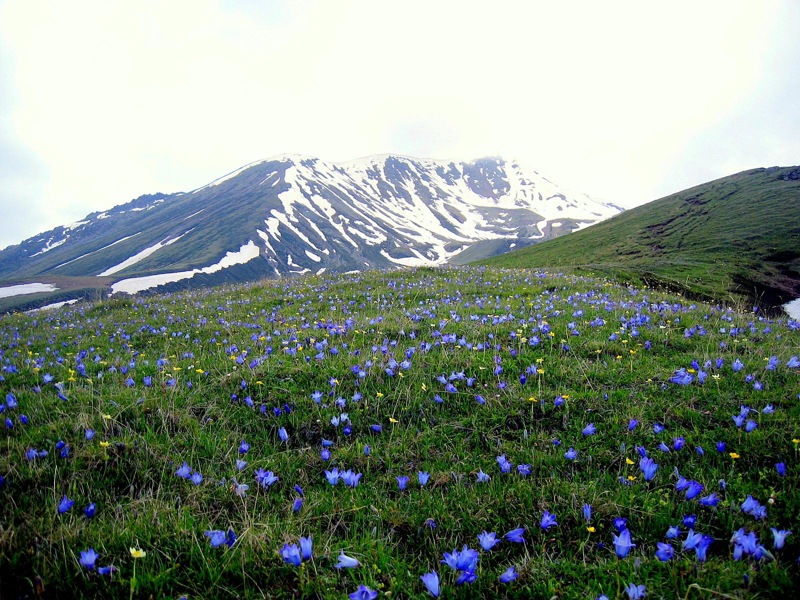Fileview Climbing Up To Gergeti Glacier Flowersg Wikimedia