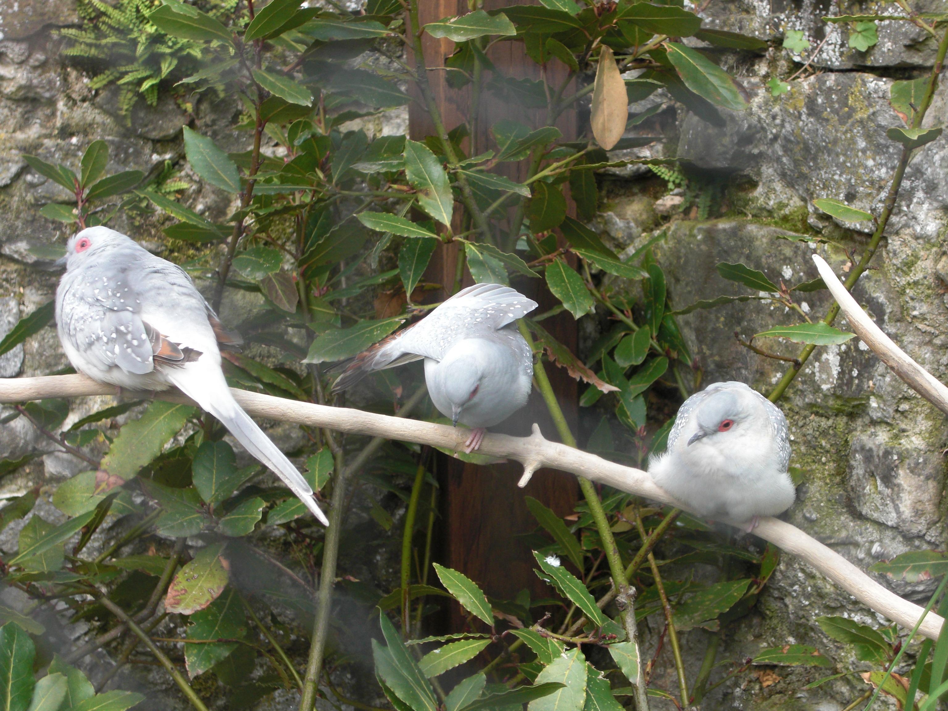 File yvoire jardin cinq sens colombes for Jardin 5 sens yvoire