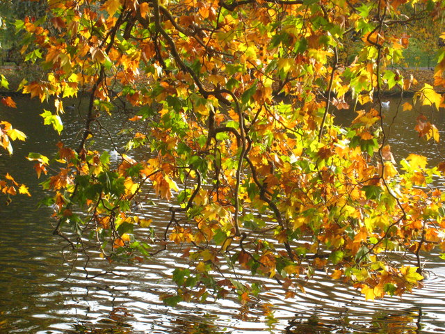 Autumn leaves beside St James's Park Lake - geograph.org.uk - 1568794