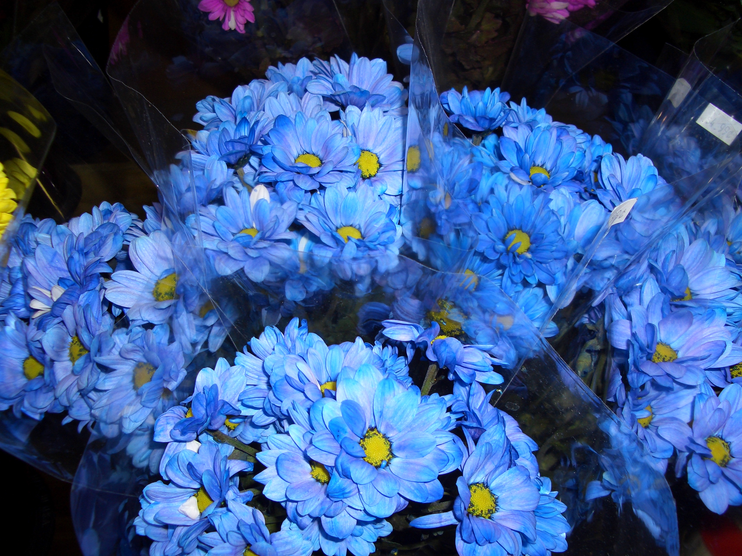 File Blue Flowers Undetermined Species Jpg