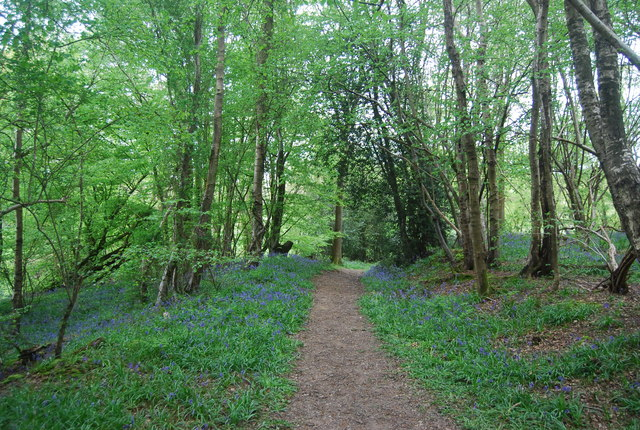 Bluebells by the Sussex Ouse Valley Way - geograph.org.uk - 1956030