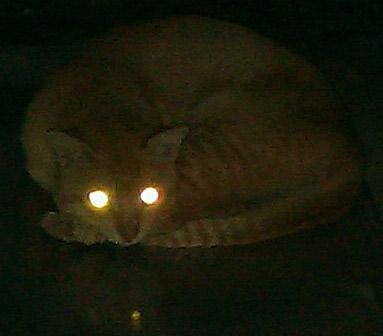 Cat Laser Eyes At Night