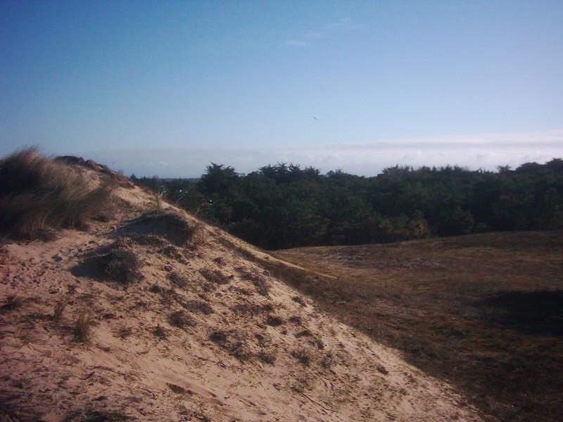 File:Dunes sur Noirmoutier010.JPG