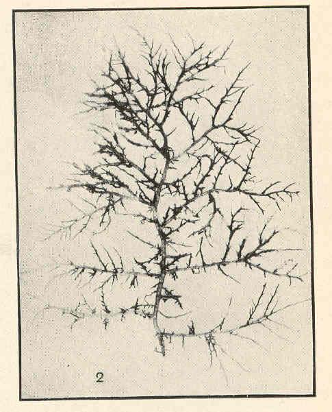 /Art Paper Folia 601/