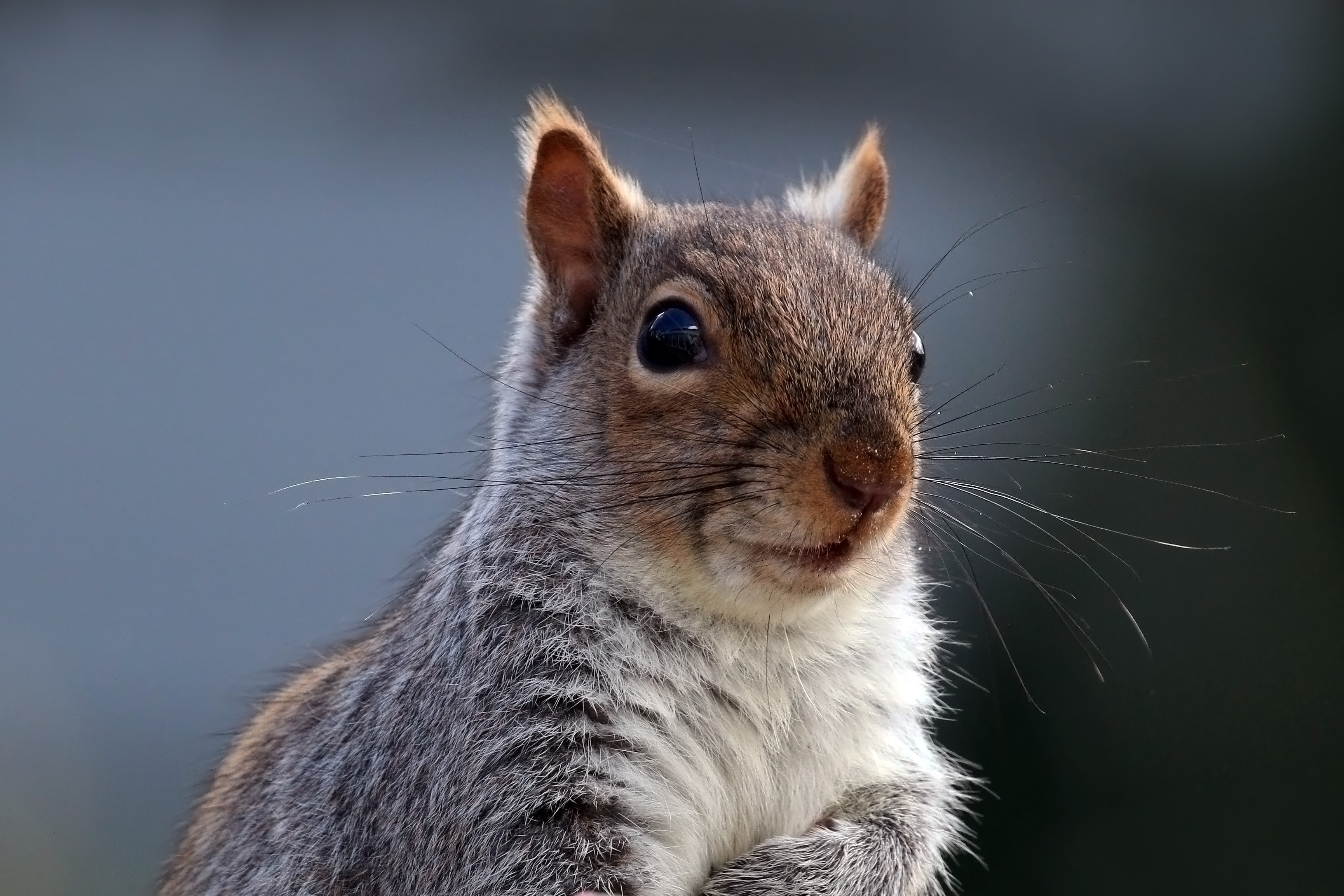 Volunteers Counted All the Squirrels in Central Park | Smart