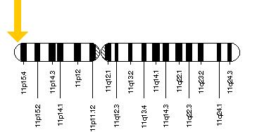 HBB gene (responsible for sickle cell anaemia) is located on the short (p) arm of chromosome 11 at position 15.5. HBB location.png