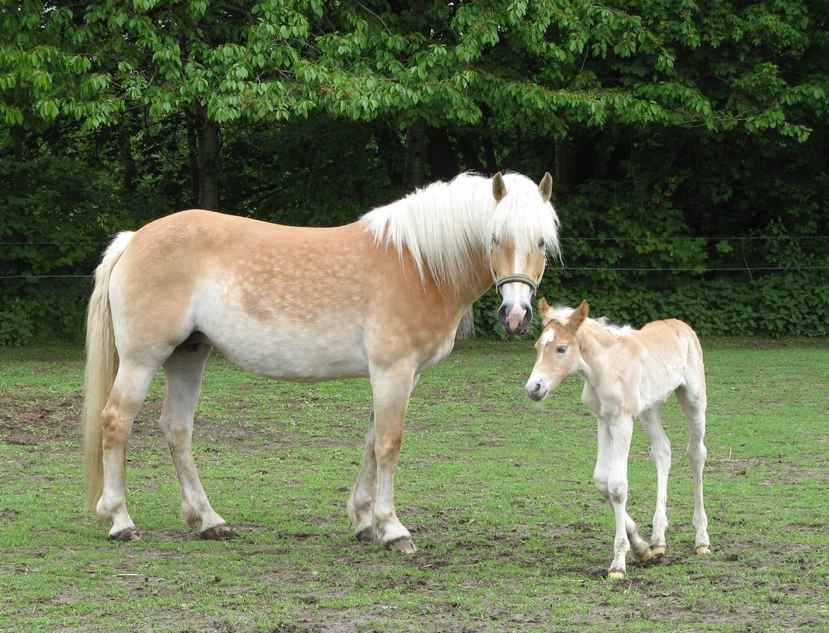 Image Result For Cute Baby Horses