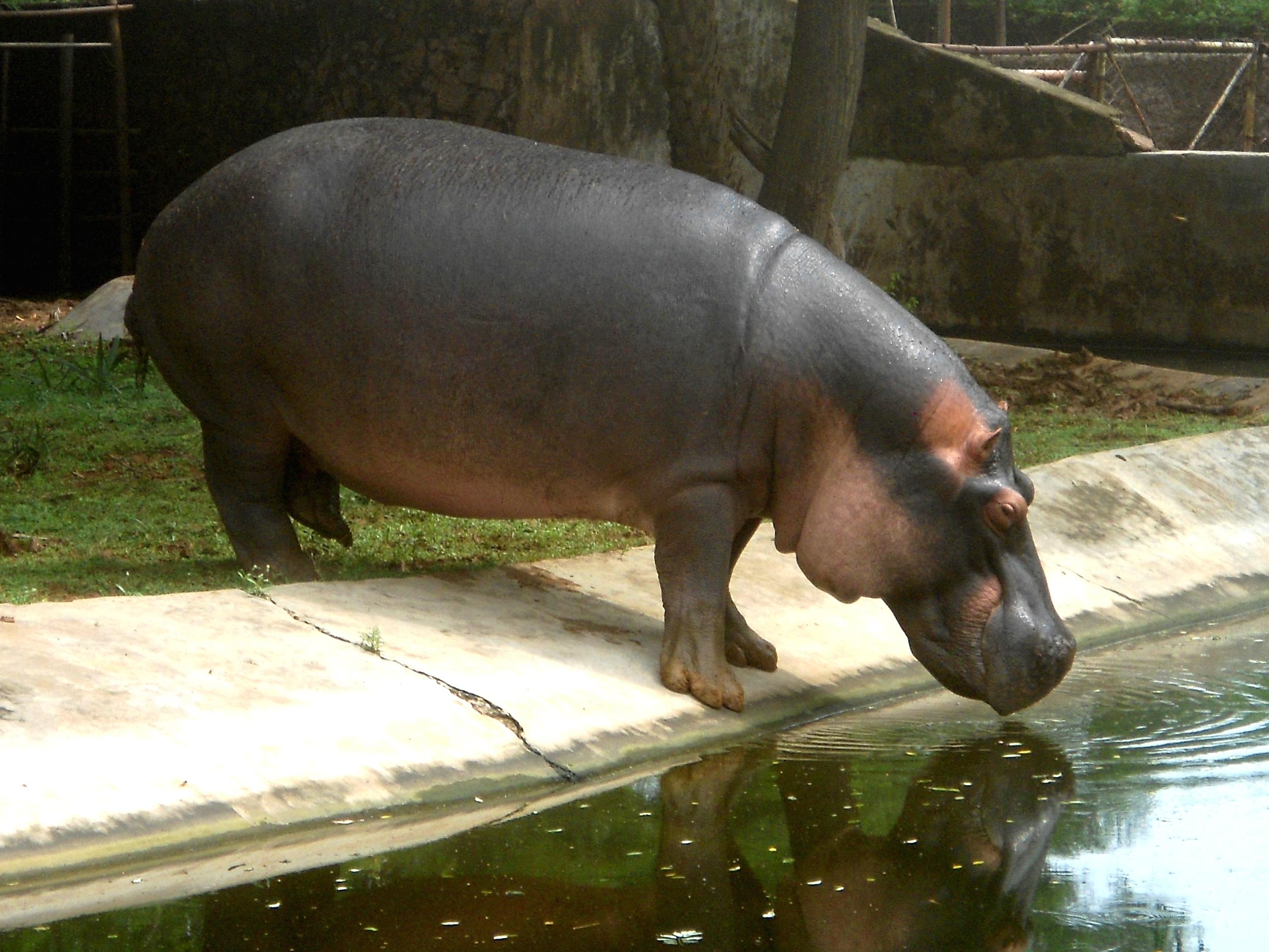 Indira Gandhi National Park Indira Gandhi Zoological Park