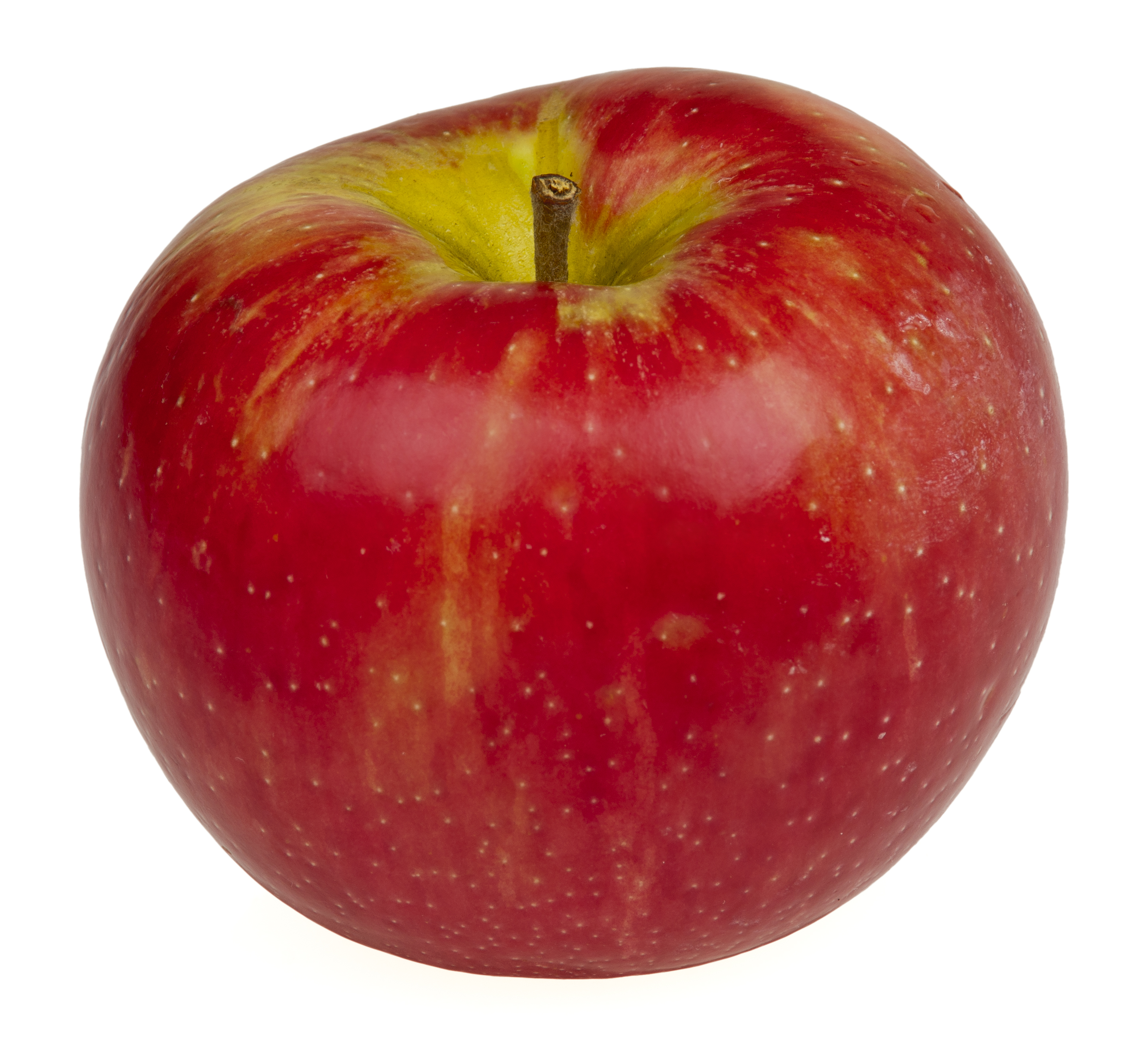 Description Honeycrisp-Apple.jpg