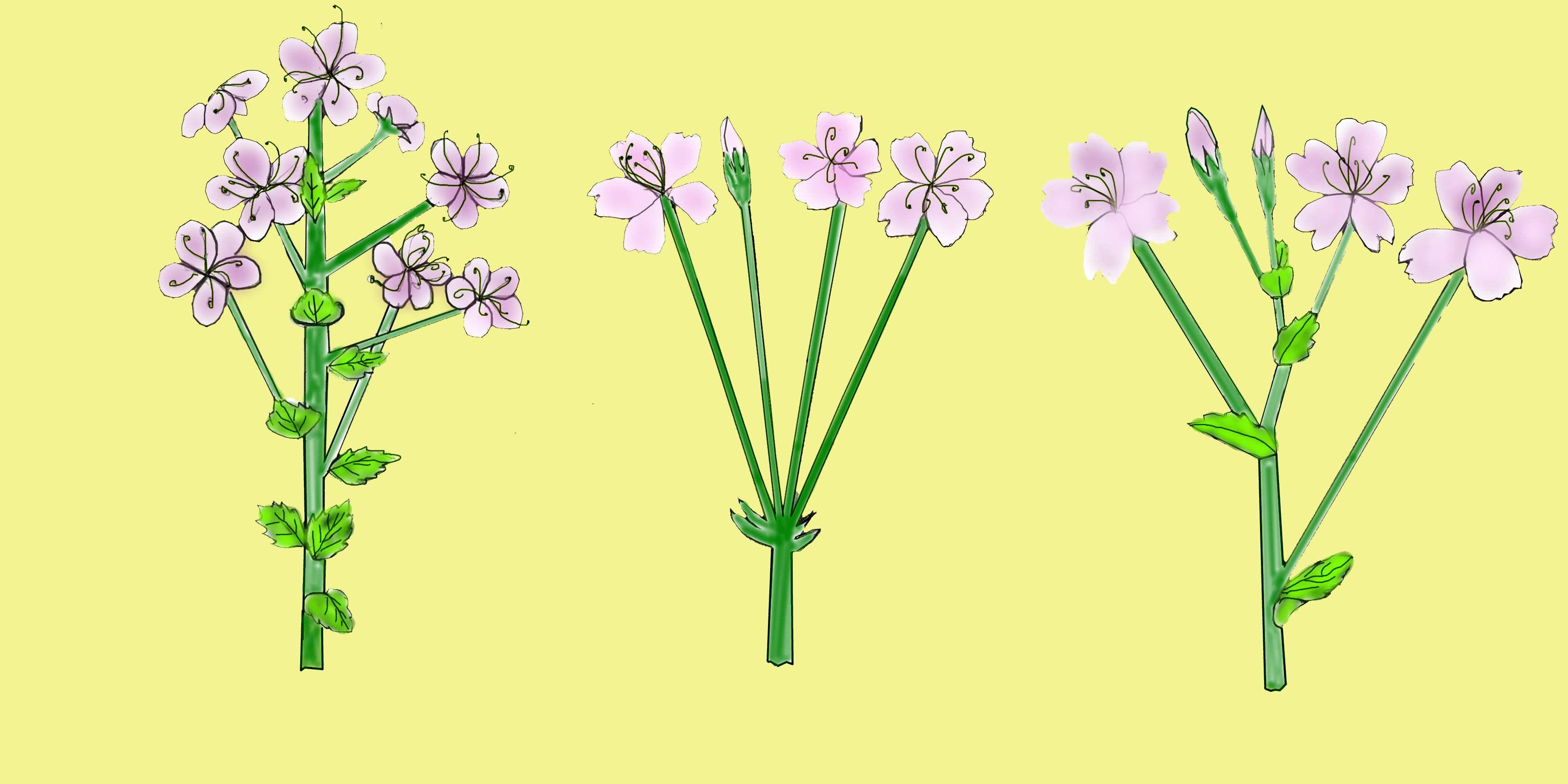 خرید گل و هدیه گل فروشی اینترنتی ایگل فروشگاه آنلاین