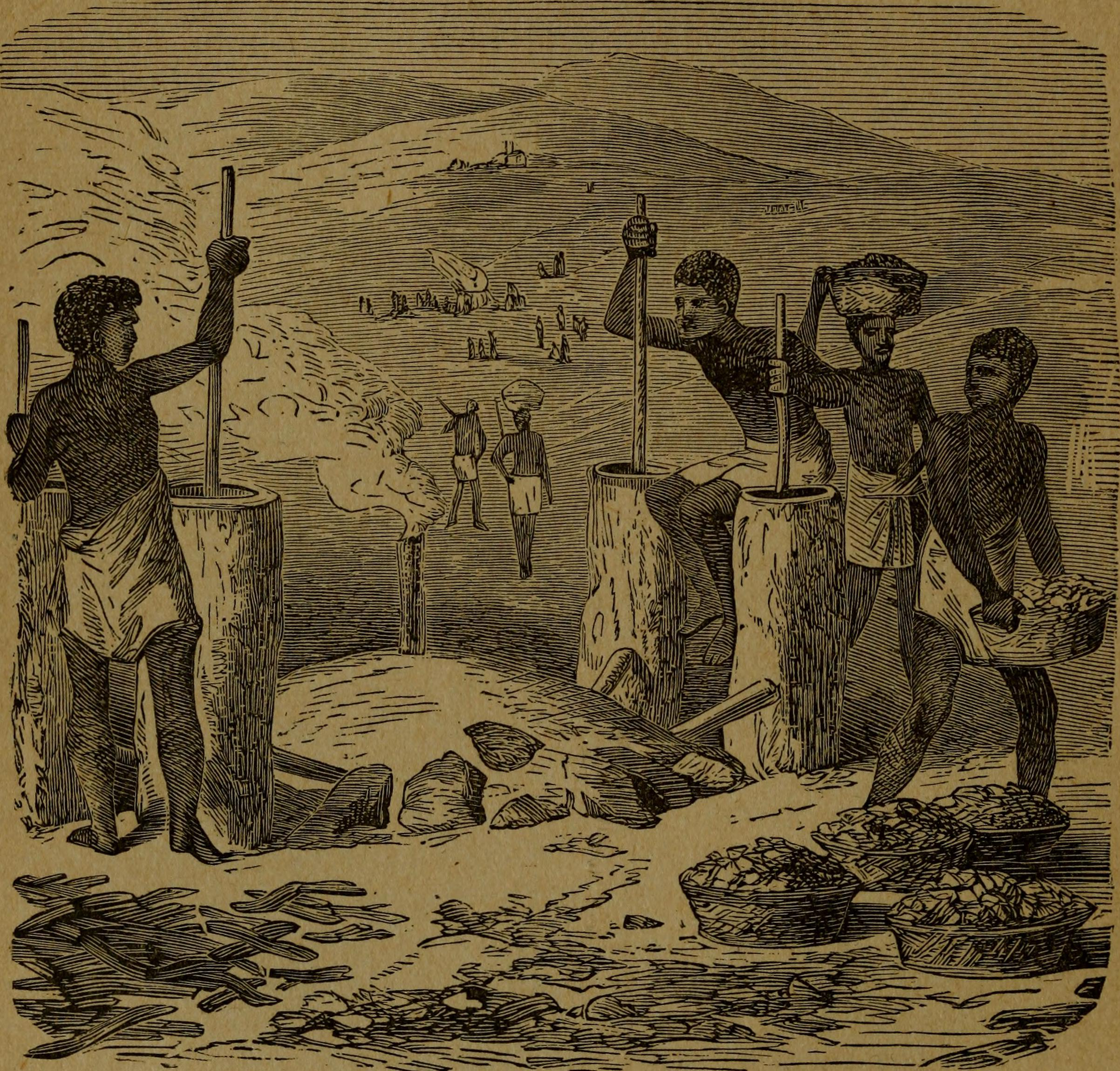 an examination of the famous explorers of africa Europe & africa in the 19th century by jim jones this course begins with an examination of european and african societies in the 19th century in order to determine why the limited information brought back to europe by explorers like mungo park and henry morton stanley made.