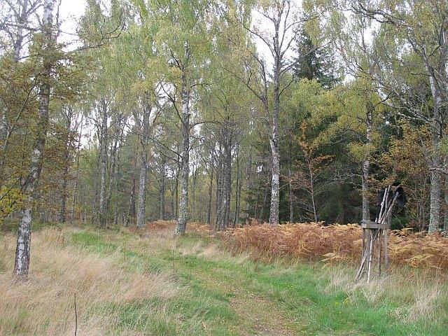 Loch Insh woodlands - geograph.org.uk - 1004112
