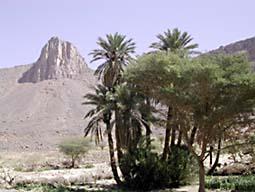English: oasis (Algeria)