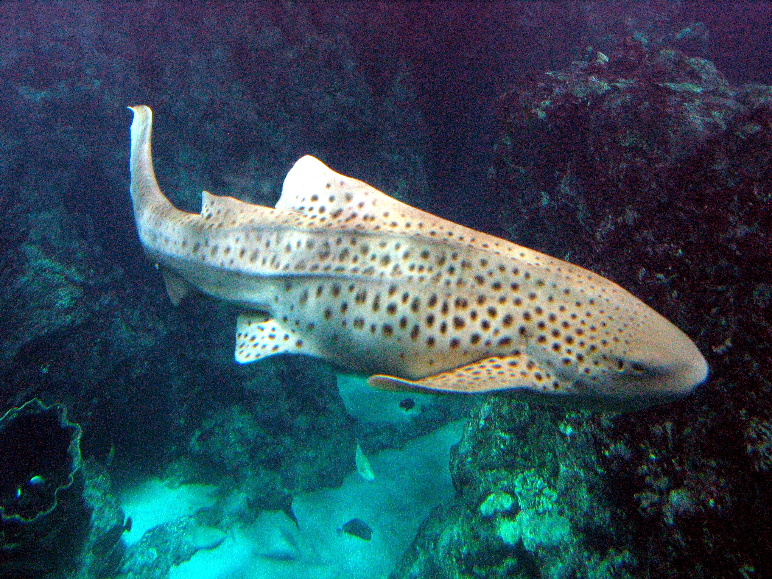 océanopolis - les aquariums 010.jpg