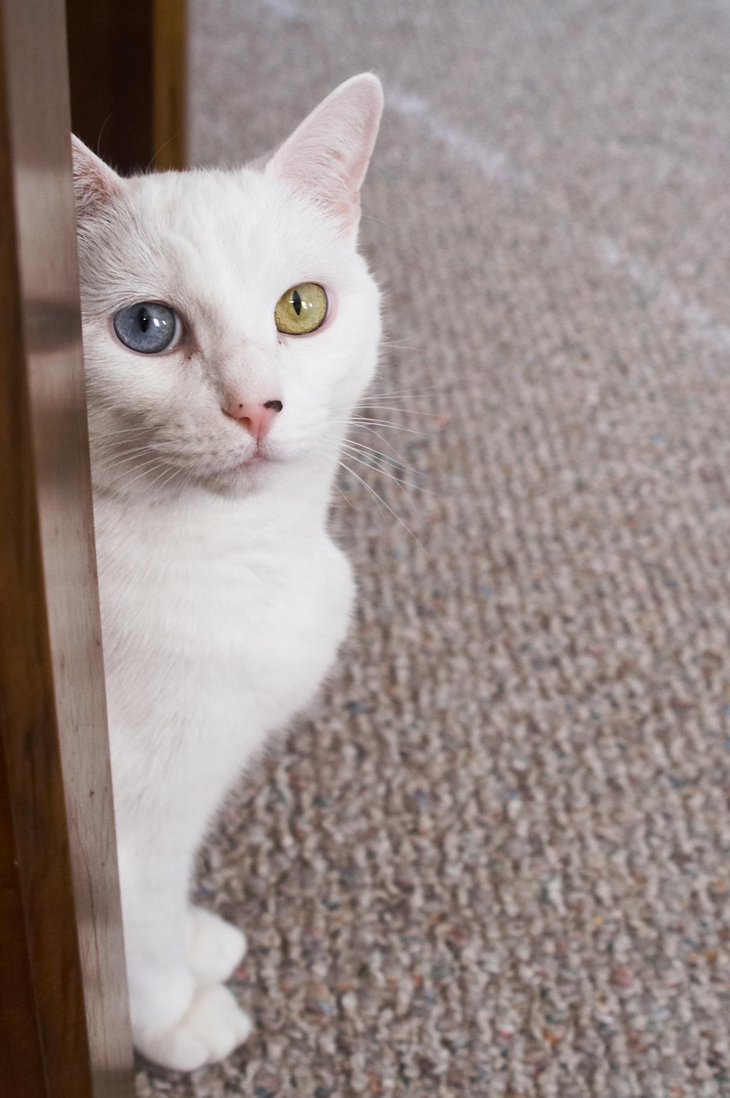 Minecraft White Eyed Adidas Dog Nose Skins