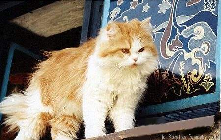 My Elderly Cat Gets Disoriented