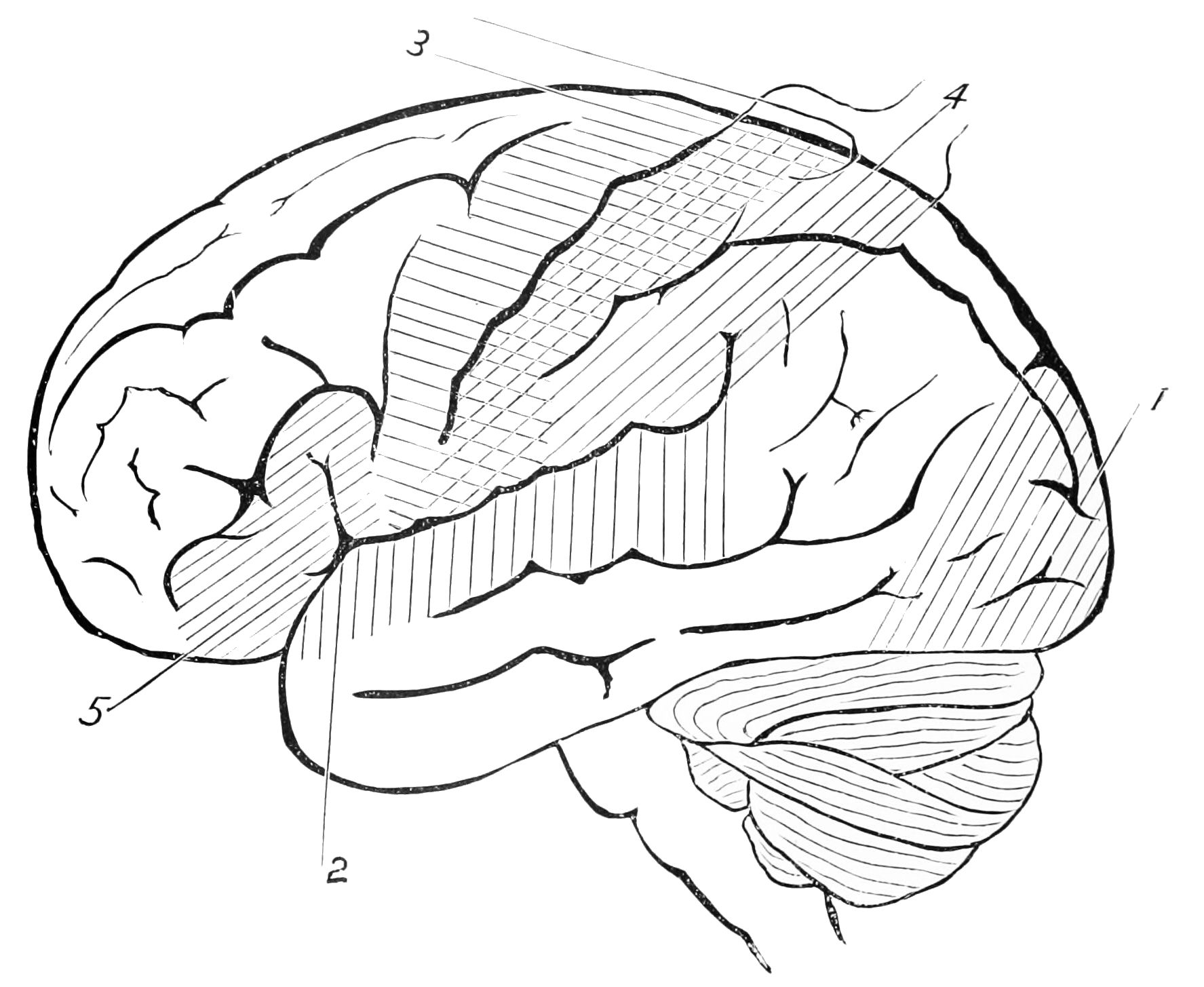 brain outline drawing - photo #24